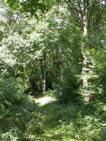 Woodland near Old Mill Farm