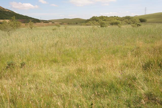 Lochindores Marshland