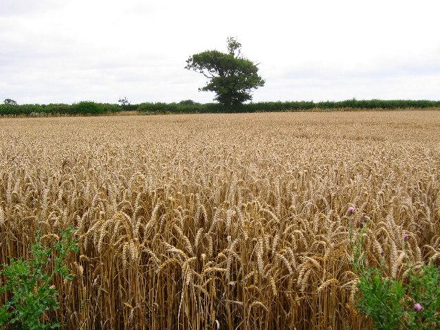 A165 - Farmland