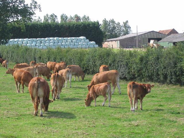Seaton Farm