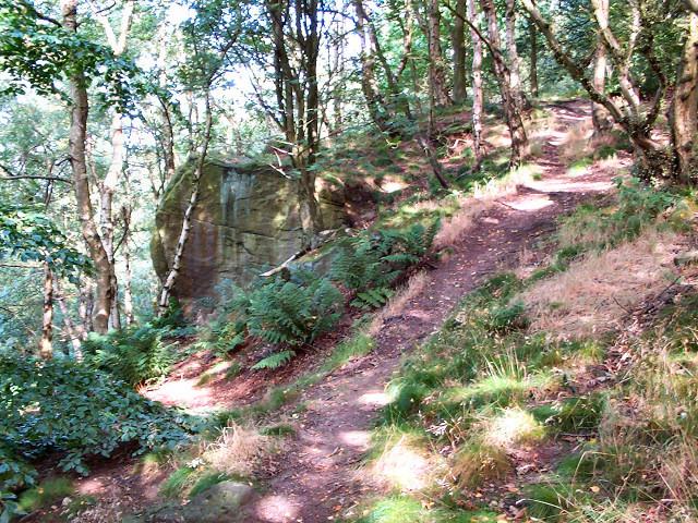 Crag in Great Dib wood