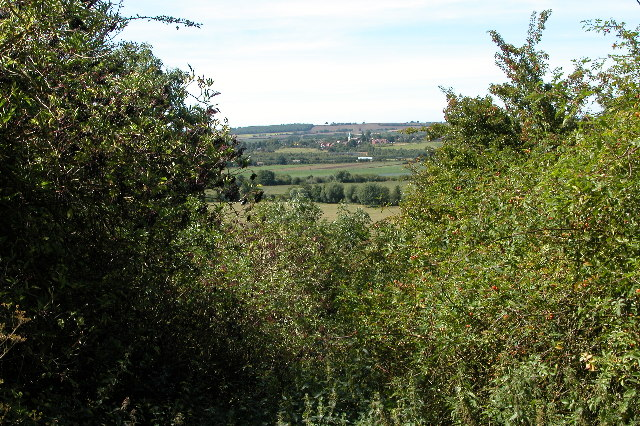Trees on Cleeve Hill, near Cleeve Prior