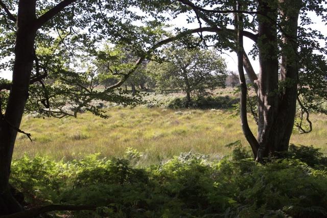 Bog in Backley Bottom seen from Bratley Wood