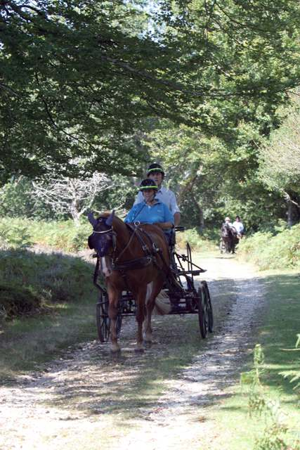 Horse-drawn carriages in Bratley Wood