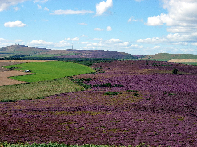 Heather moorland between Dodd Hill and Lorns Hill