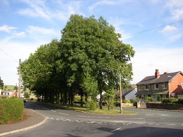 Trees at Smith House Lane, Lightcliffe, Hipperholme