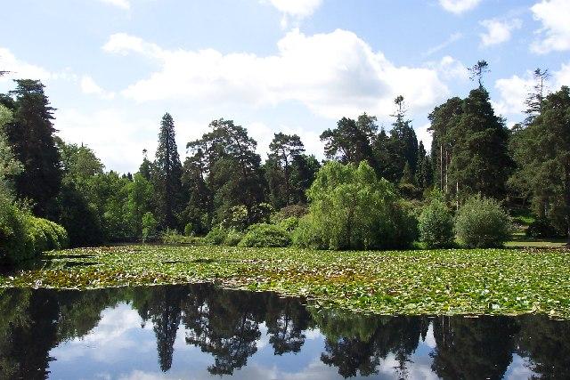 Marshal's Lake, Bedgebury Pinetum, Kent