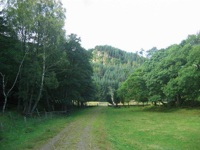 Forest below Mor Bheinn