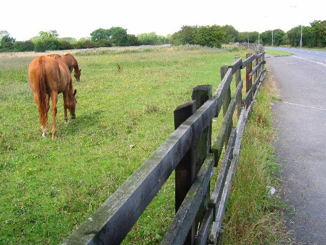 Priory Road - Pasture Land