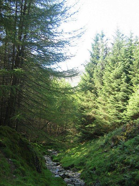 Forest below Mor Bheinn.