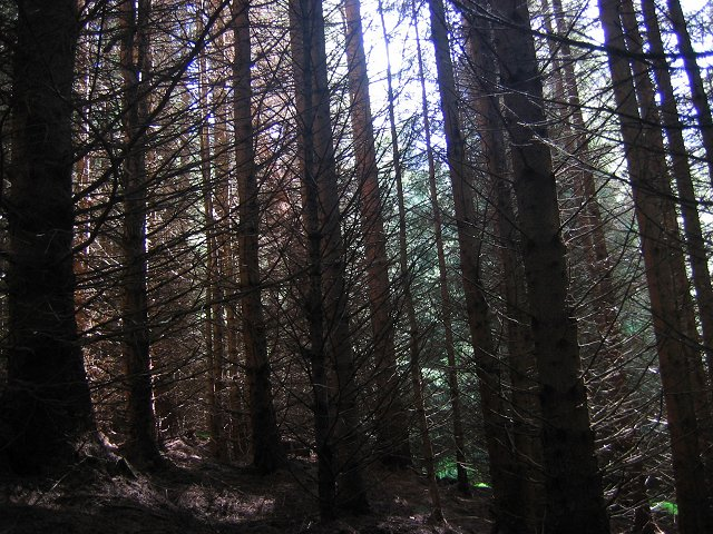Spruce, Gleann Ghoinean