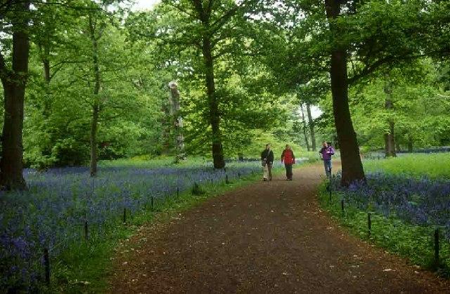 Bluebell Walk, Kew Gardens