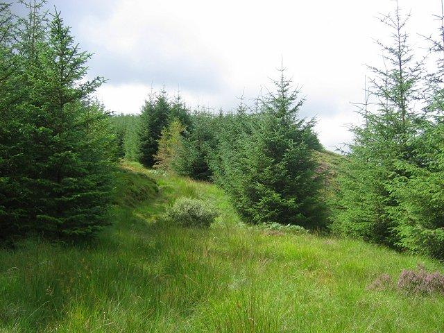 Forest, Gleann Domhain