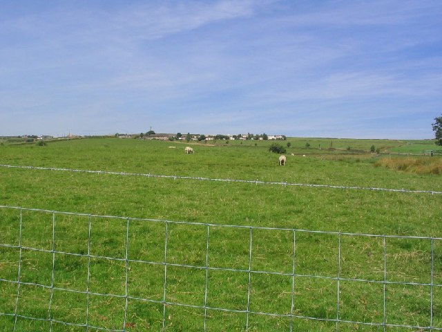 Pasture and Sheep