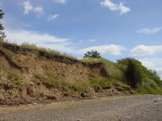 Erosion on clay cliffs