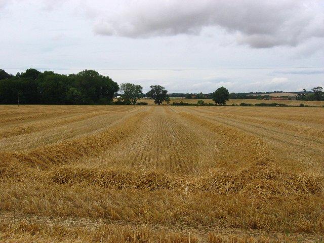 Barley straw, Markle Mains