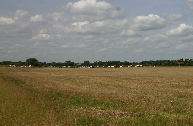 Piggeries on Kentford Heath
