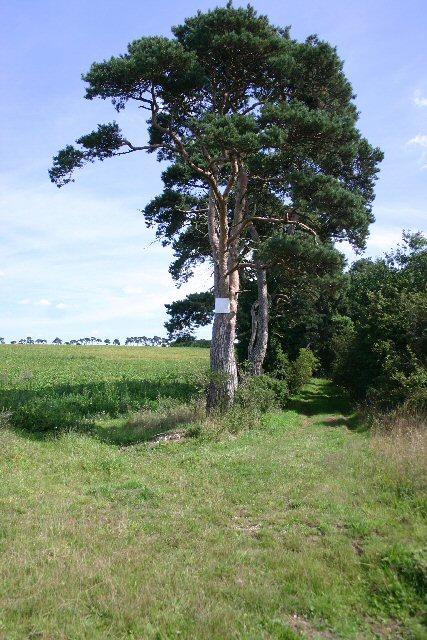 Track to Higham Estate