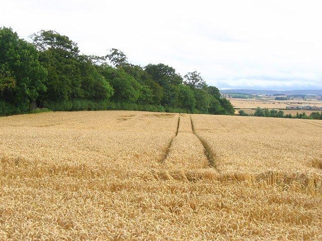 Farmland, Beanston