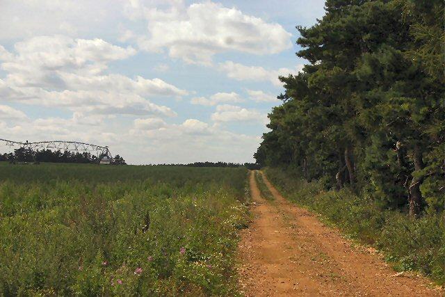 Farm track near Tuddenham
