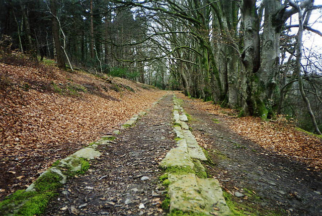Bovey Tracey: Haytor Tramway in Yarner Woods