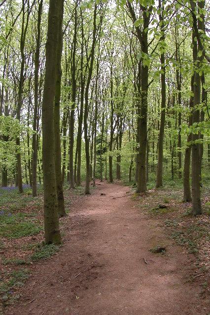 Dinmore woods