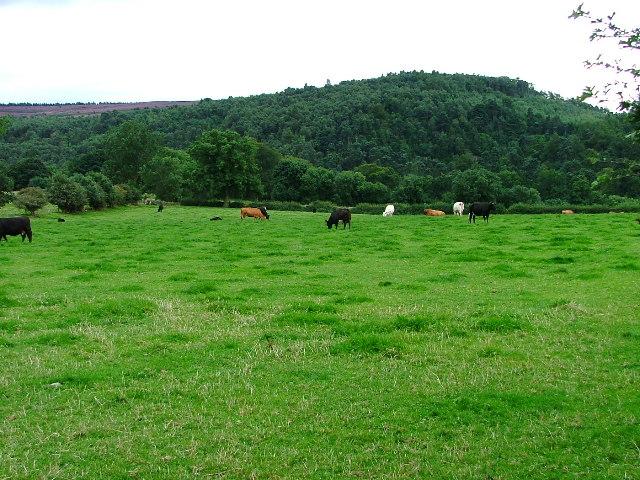 Pasture, Greenhills Farm
