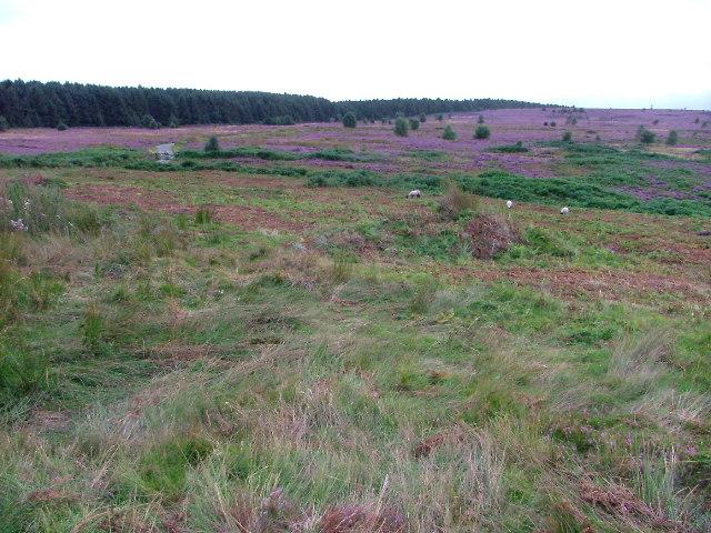 Thimbleby Moor