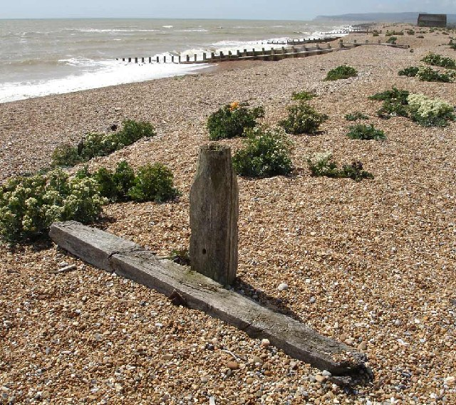 Shingle habitat near the old lifeboat house