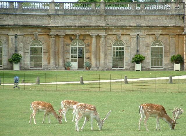 Dyrham Deer