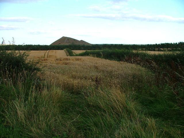 Farmland, Kilton Lane