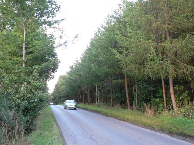 Road through Scone Wood