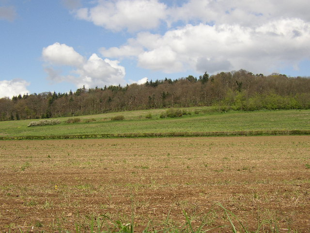 Fields near Shalford