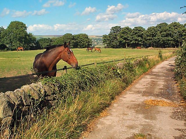 Horses near Stead