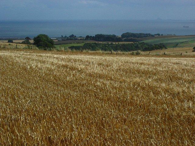 Barley, Longloch.