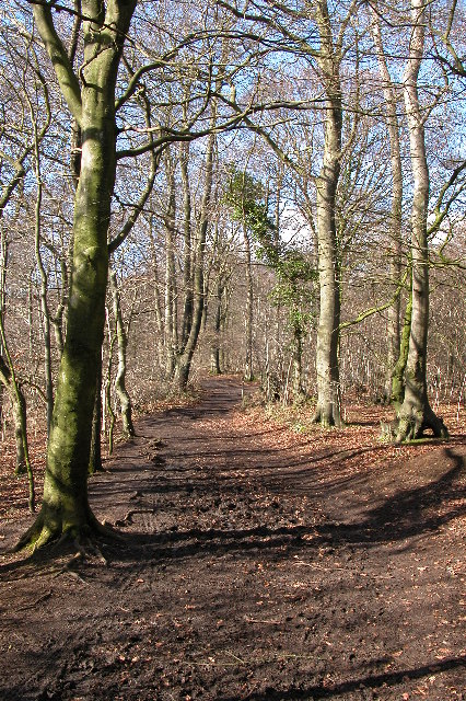 Cotswold Way on Wotton Hill
