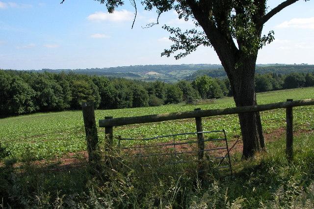 Penyard Hill