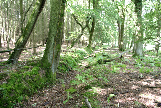 Woodbank at Clumber Inclosure