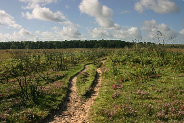 Hincheslea Wood