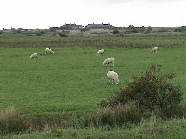 Sheep and Watch Houses
