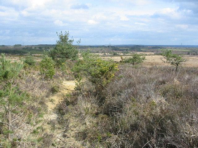 Cranborne common
