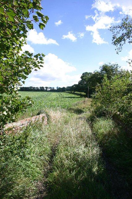 Track near Dalham