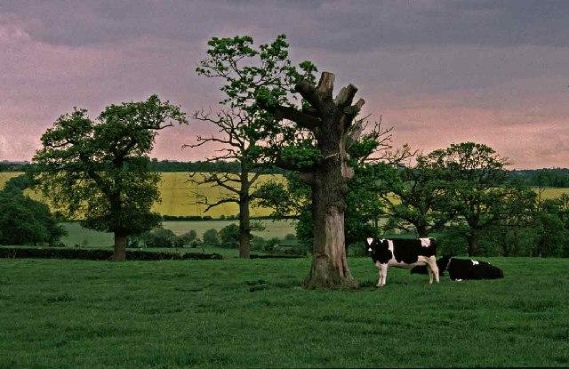 Farmland off The Ridgeway, Enfield