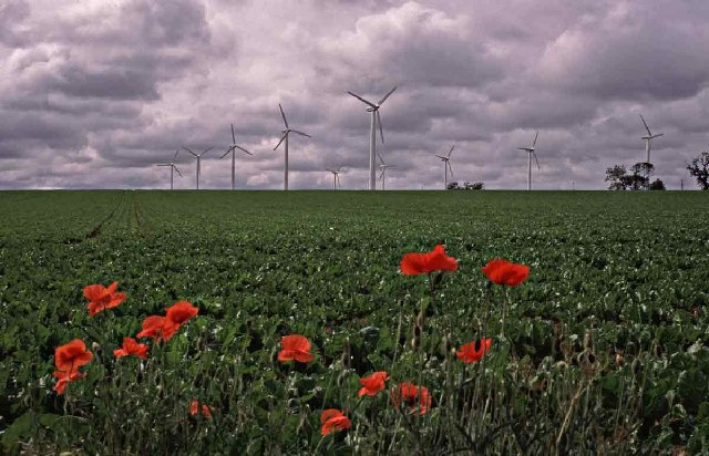 Wind Turbines at Somerton