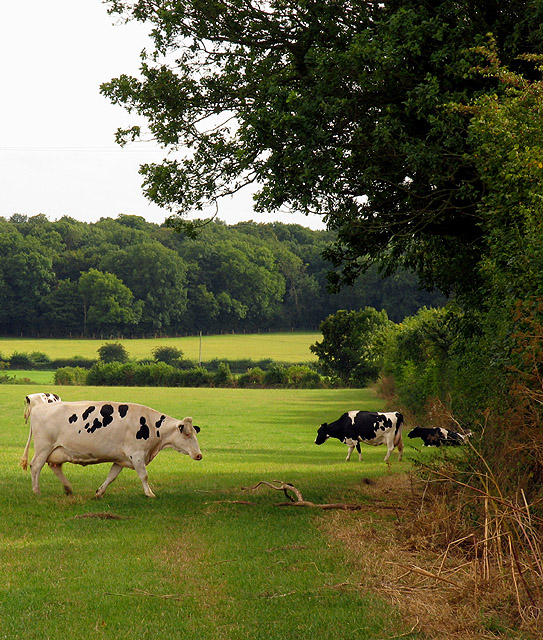 Pasture near Grittleton