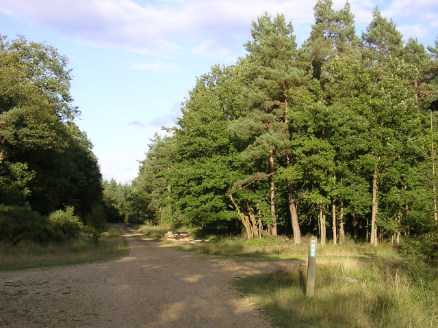 Off-road cycle route crossroads near the Stubby Copse Inclosure, New Forest