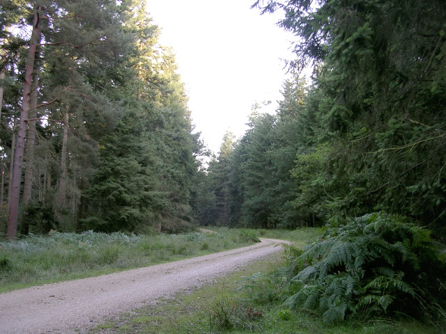 Off-road cycle route between Denny Lodge Inclosure and Stubby Copse Inclosure, New Forest