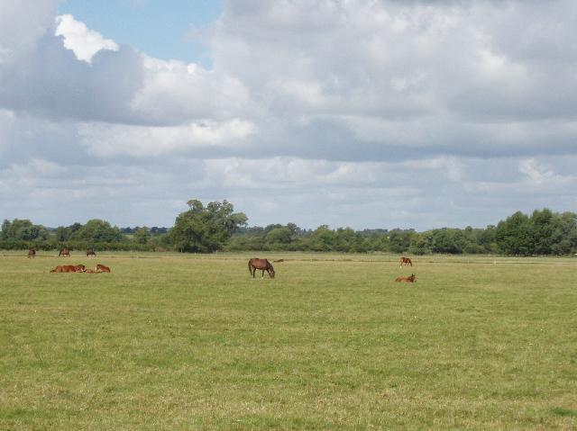 Horse paddock, Aston Mullins