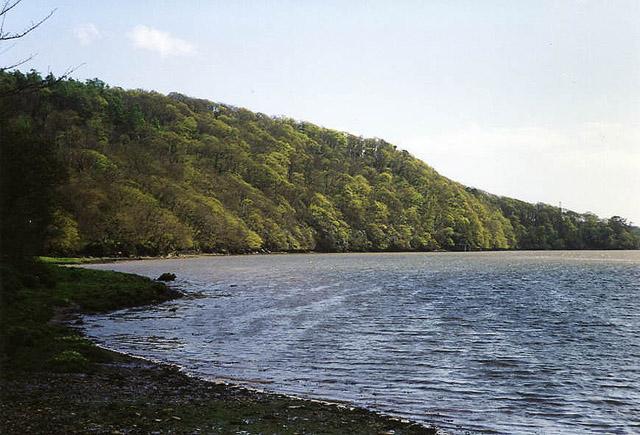 Bickleigh: Blaxton Wood from Maristow Quay