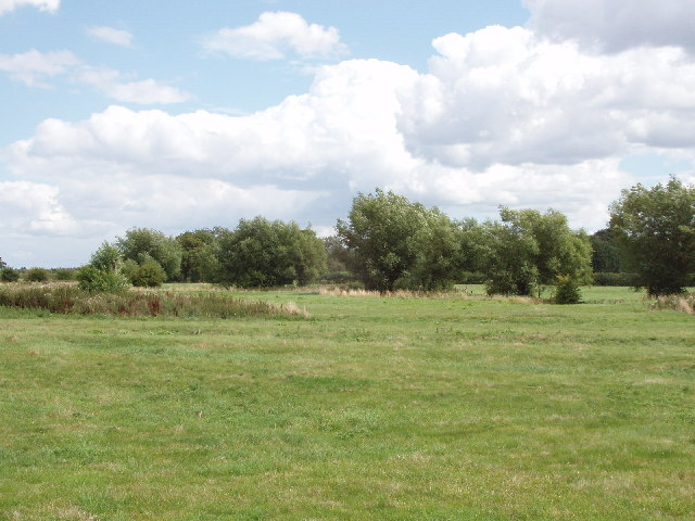 Pasture and willow trees, near Haddenham